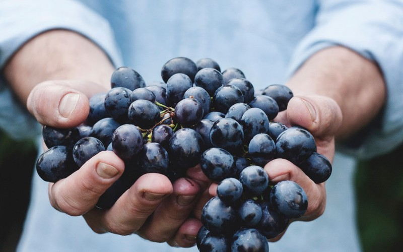 What Do Grapes And Technology Have In Common?